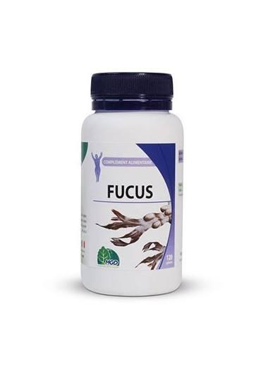 FUCUS (1)